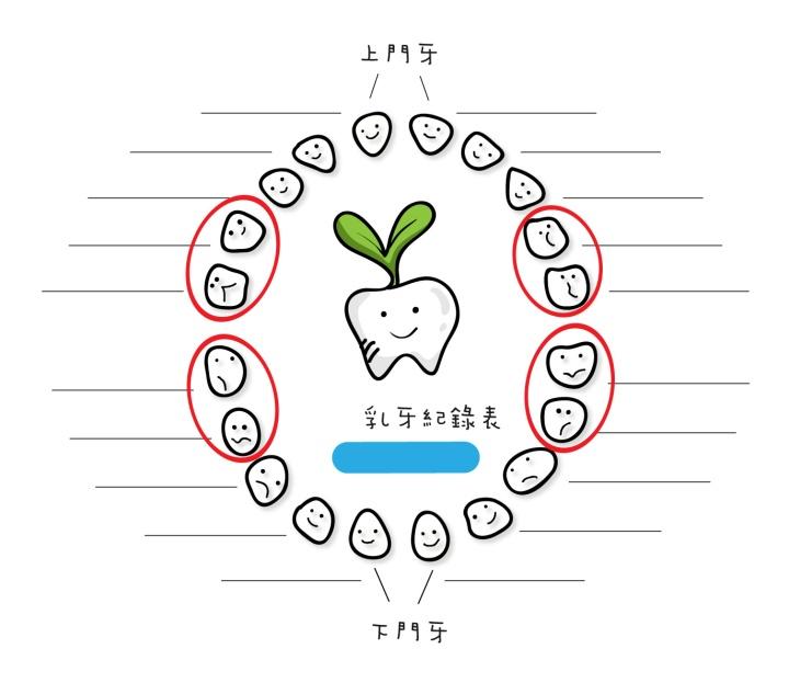乳牙蛀牙頻率最高的八顆牙齒位置